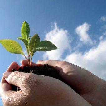 Какие семена можно сажать под зиму — подробной описание всех видов растений, правила ухода (20 фото)