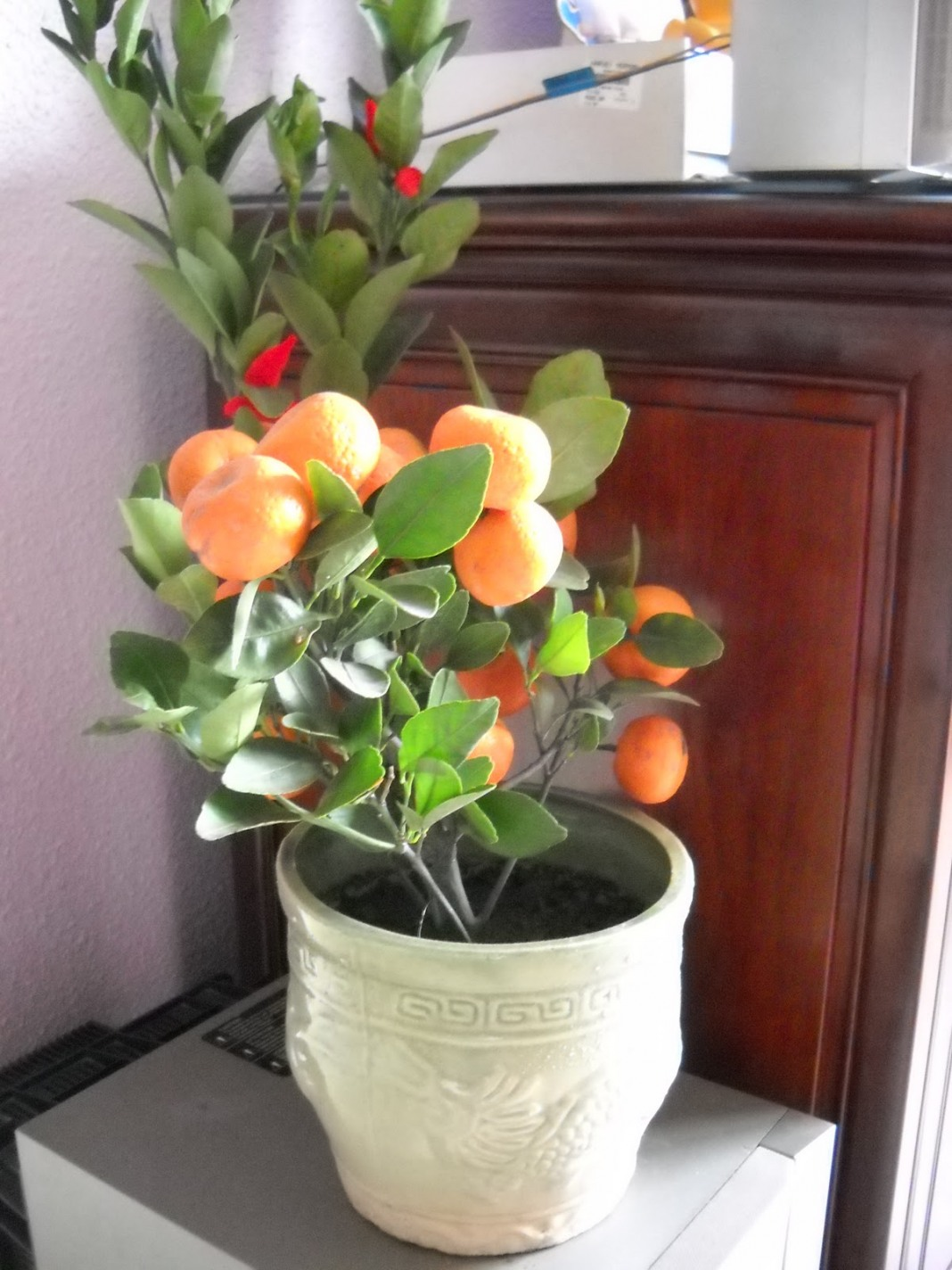 citrus-reticulata-7