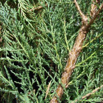 Дерево счастья своими руками - пошаговая инструкция (35 офто)