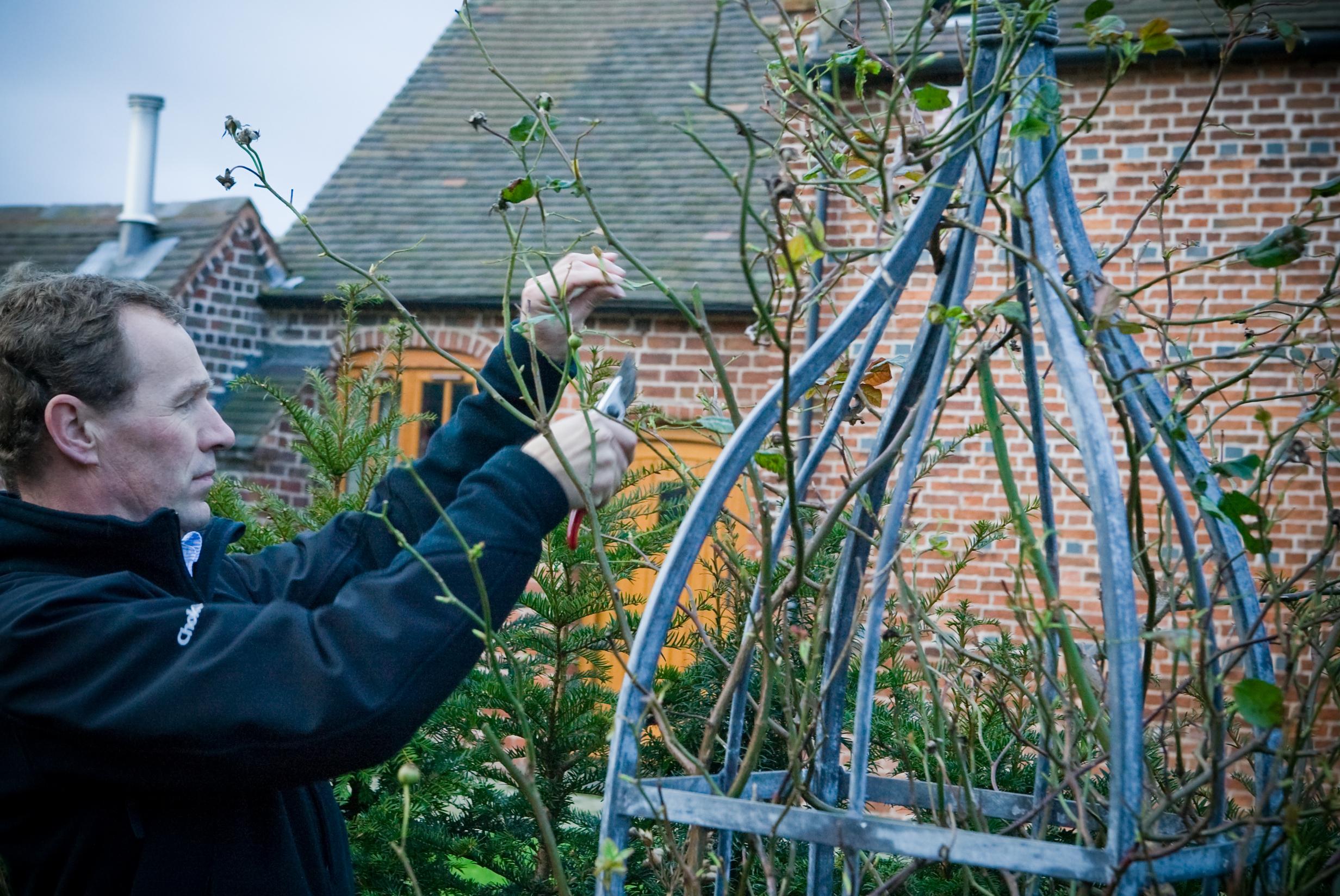 Pruning Jan 08