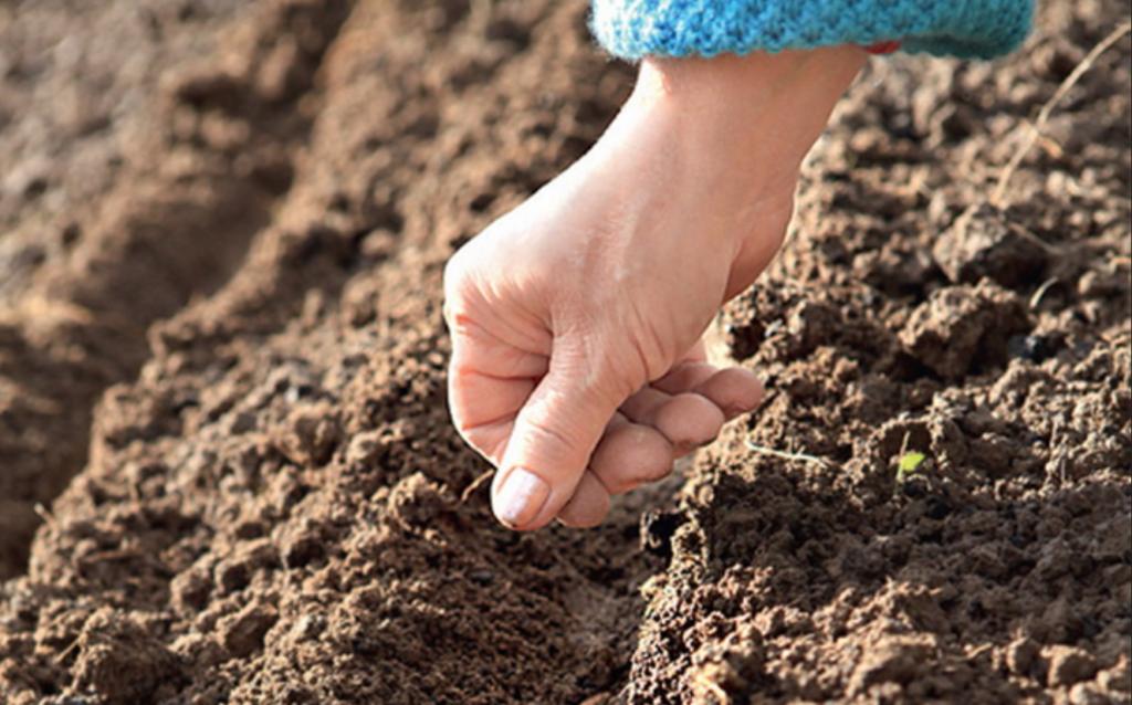 Семена сеют или сажают 172