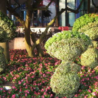 Как сделать топиарий (дерево счастья) своими руками: простая инструкция с описанием, фото и видео