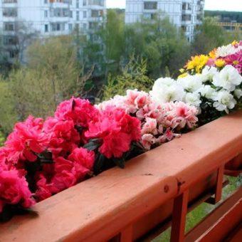 Правильный уход за цветами на балконе
