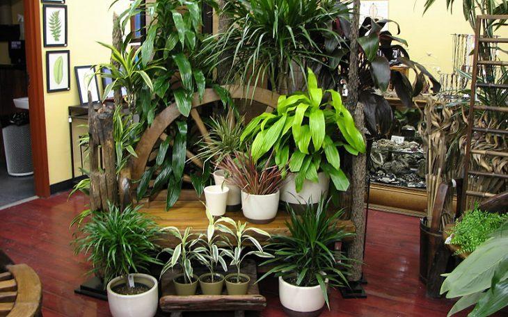 сделать зимний сад в квартире