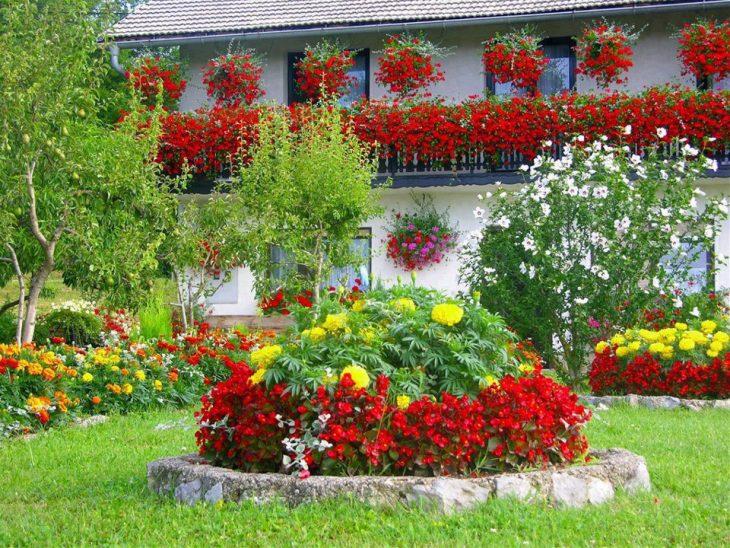 цветы в палисаднике оформление