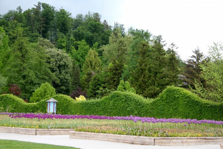 голландский сад фото