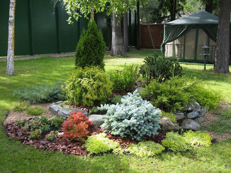Где лучше сажать хвойники в саду 1