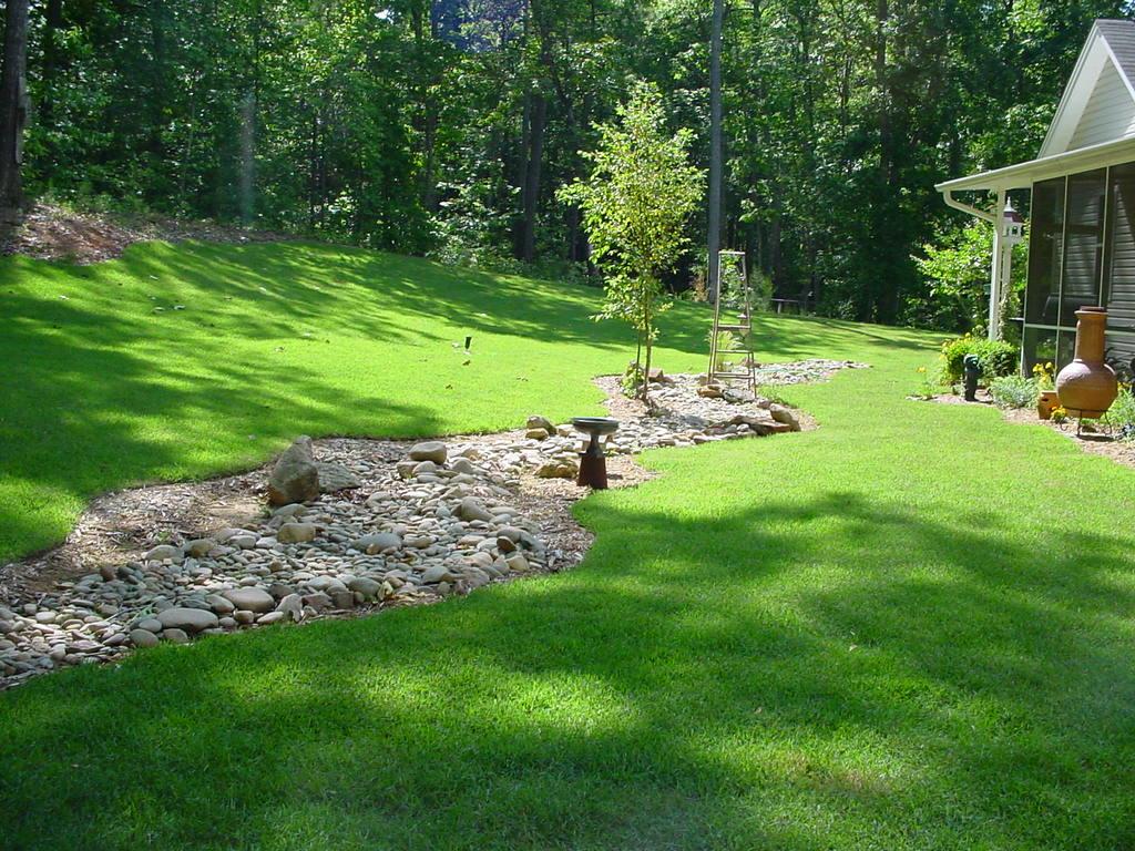 Фото газон своими руками на даче фото 46