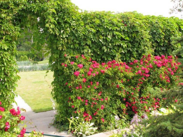 посадить живую изгородь