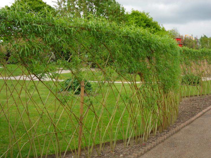 как сажать живую изгородь