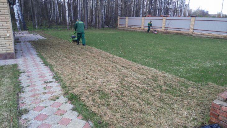 газон весной