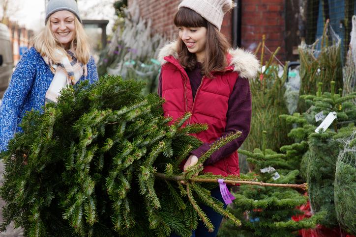 Как выбрать елку? Выбираем натуральное деревце kulray.ru