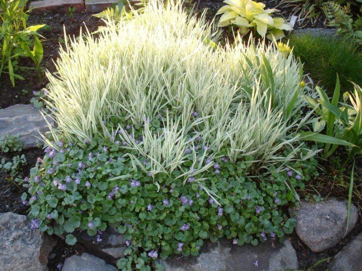 декоративная трава фото