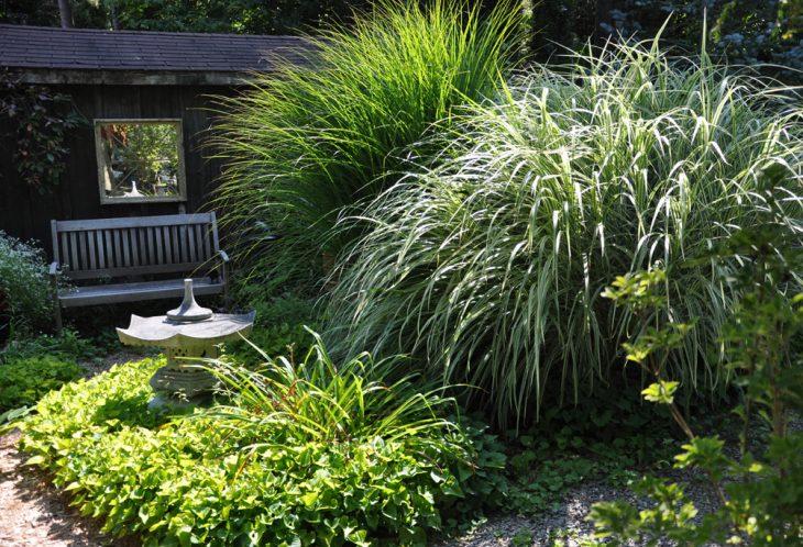 декоративные злаки и травы