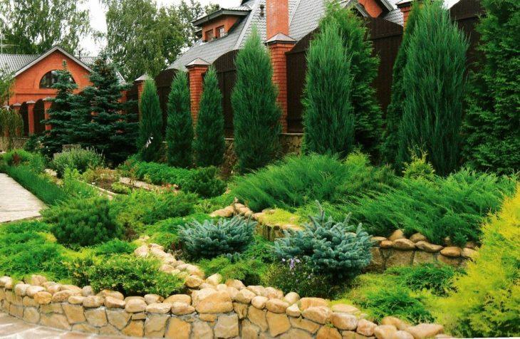 хвойные кустарники для сада