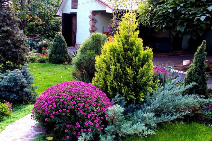 хвойные композиции в саду