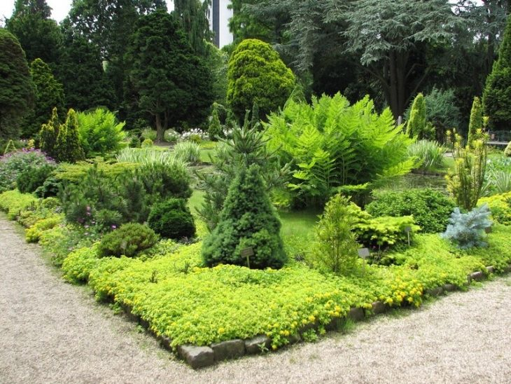 хвойные в дизайне сада