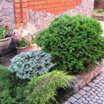 красивый хвойный сад