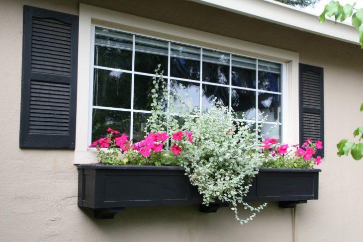 Красивые балконные цветы (80 фото). Какие цветы посадить в балконные ящики