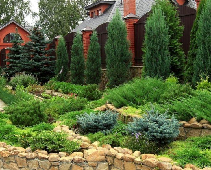 Горная сосна - сорта и применение горной сосны в саду