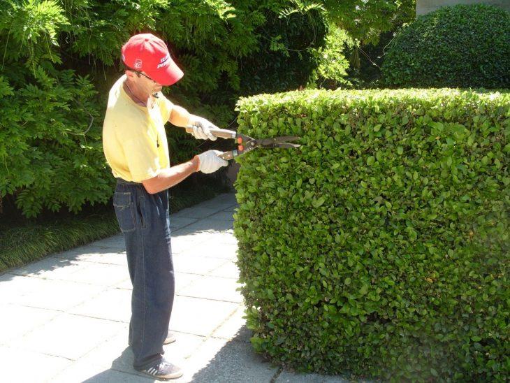 когда необходимо проводить декоративную обрезку кустарников