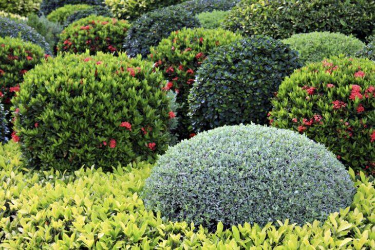 обрезка декоративных кустарников весной