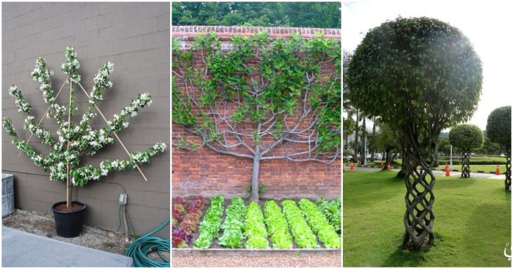 обрезка декоративных кустарников осенью