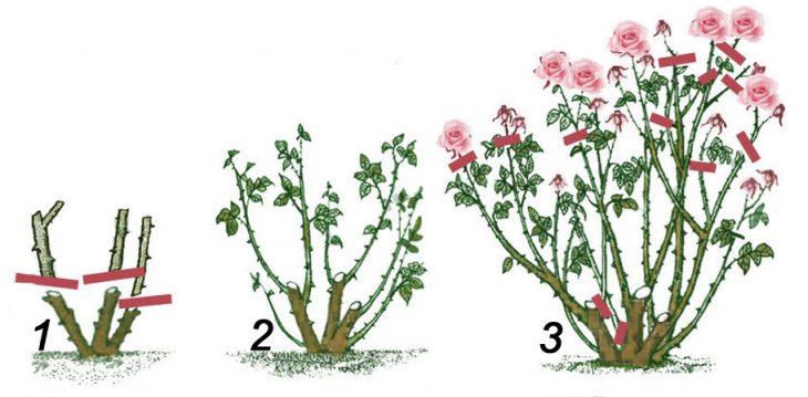 декоративную обрезку кустарников проводят