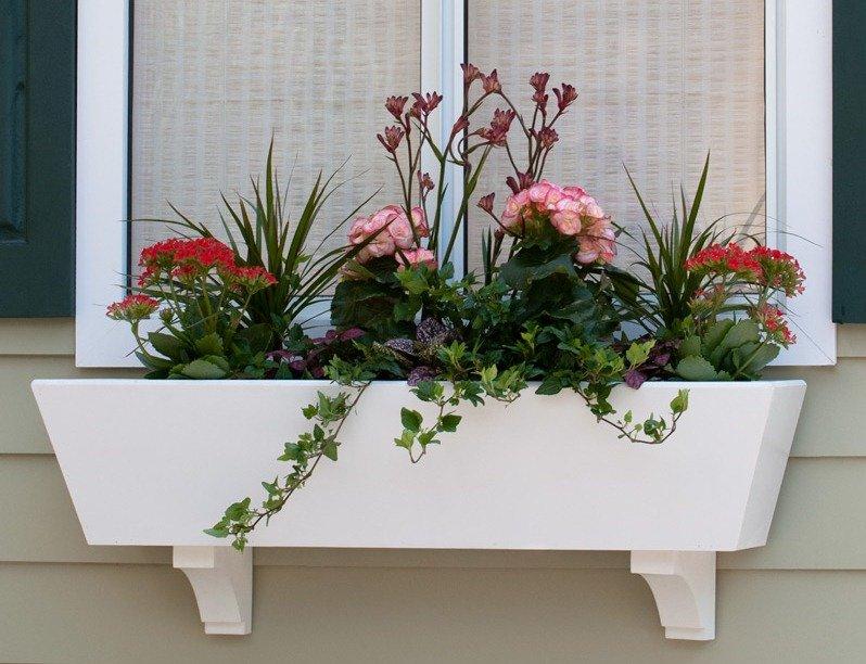 балконный ящик цветок