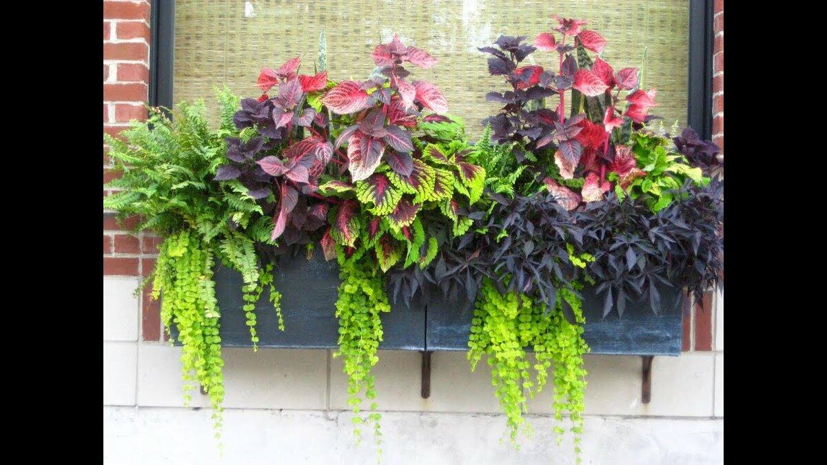 цветочные композиции из цветов в горшках