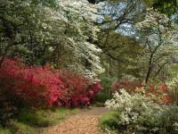 Голландский сад в ландшафтном дизайне 50 фото идей