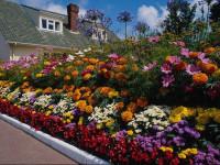 Несколько советов по уходу за растениями весной