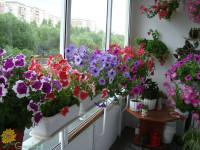 Комнатные растения для гостиной