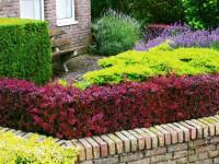 Когда необходимо проводить декоративную обрезку кустарников — 90 фото