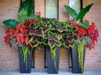 Цветочные горшки для балкона. Как украсить балкон цветами в горшках