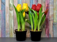 Какие луковичные цветы лучше для сада и дома. Посадка луковичных цветов