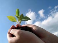 Какие семена можно сажать под зиму – подробной описание всех видов растений, правила ухода (20 фото)