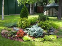 Карликовые хвойные для сада 55 фото идей