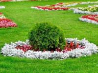 Как оформить газон на даче