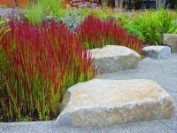 Декоративные травы – названия с 80 фото. Травы и злаки для сада