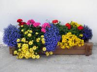Семена цветов. Как выбрать?