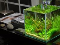 Аквариум в интерьере квартиры. 95 фото больших аквариумов в квартире