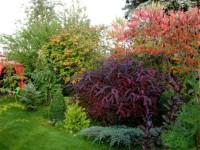 Неприхотливые тенелюбивые кустарники для сада. 100 фото низкорослых кустарников любящих тень
