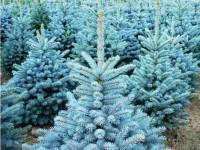 Где взять классические и экзотические саженцы деревьев?