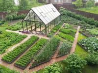 Сад и огород как хобби и источник здорового образа жизни