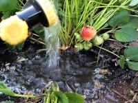 Советы по выращиванию ягодных кустарников