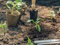 Выращивание овощей: что следует знать о посадке рассады?