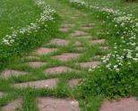 Трава для низкорослых газонов