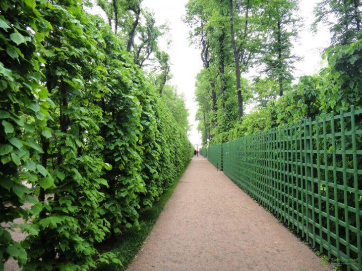 Живая изгородь на даче - 100 фото видов живой изгороди