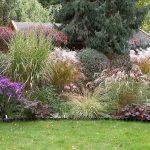 декоративная трава для клумбы